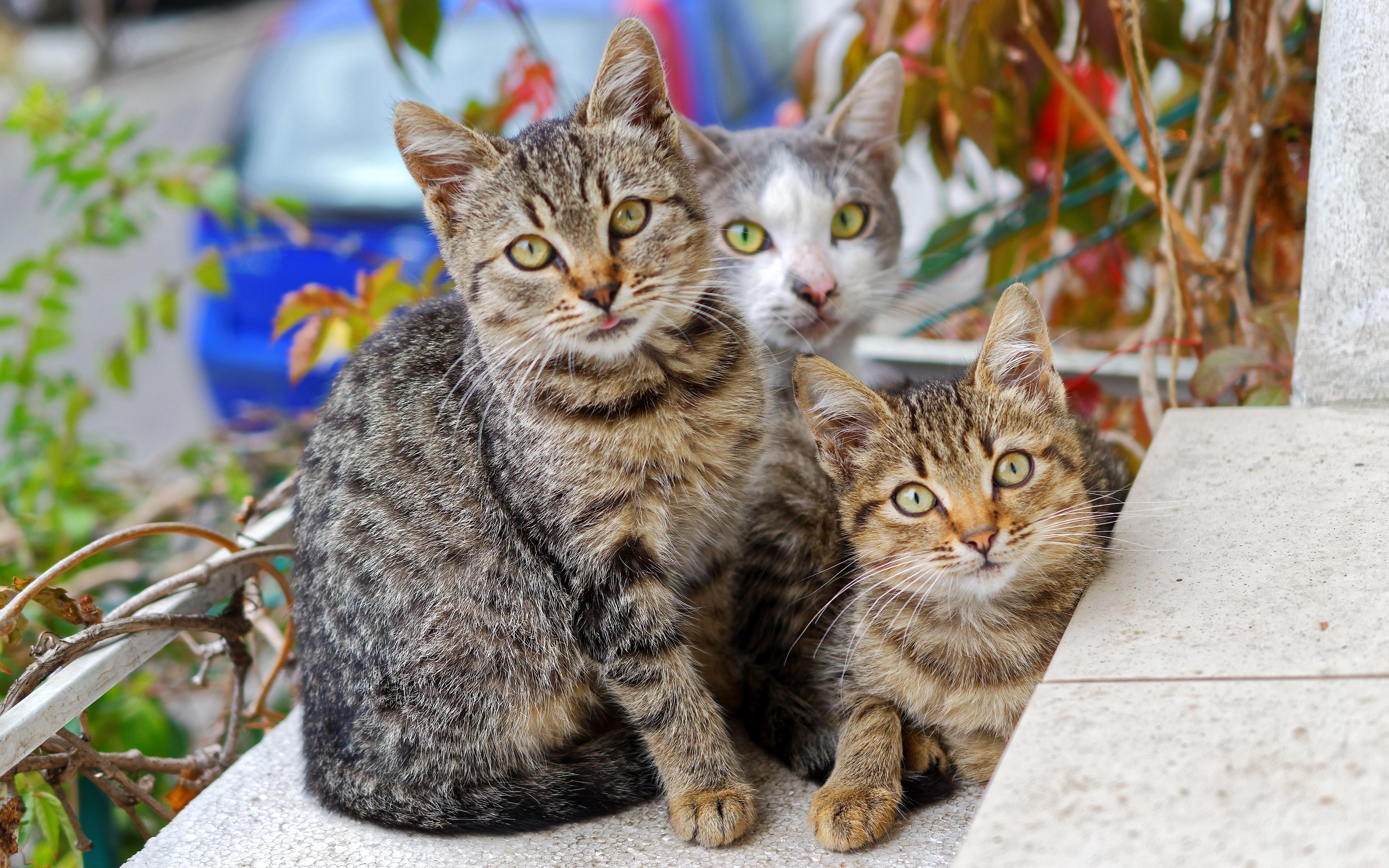 Jugendwohngemeinschaft spendet für Tierheim